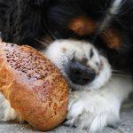 Kisah Sang Budak dan Anjing