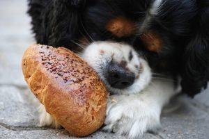 anjing hadis tentang empati dan berbagi