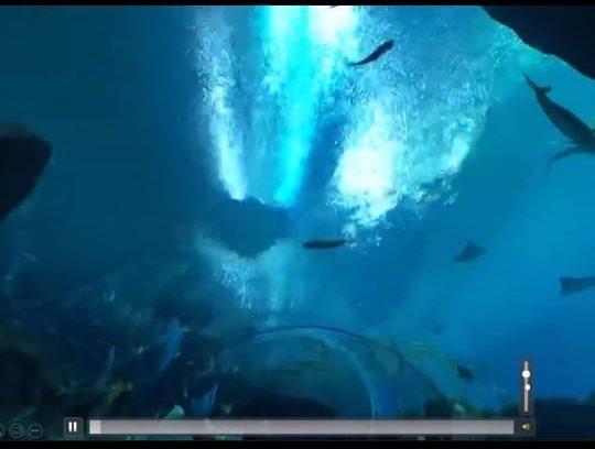 jalan-jalan virtual gratis ke akuarium georgia