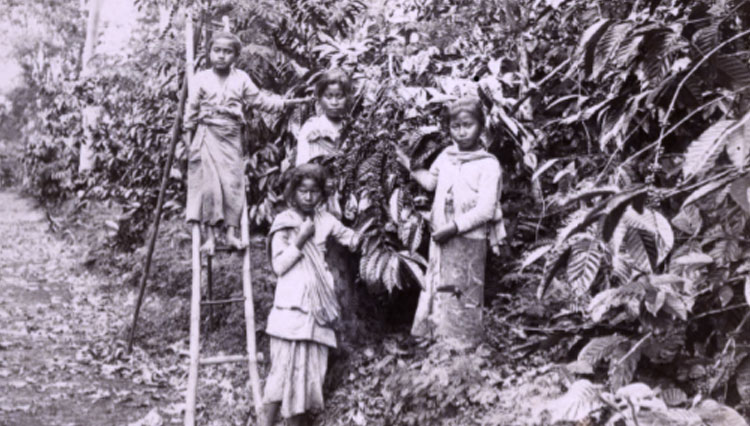 potret anak-anak petani kopi